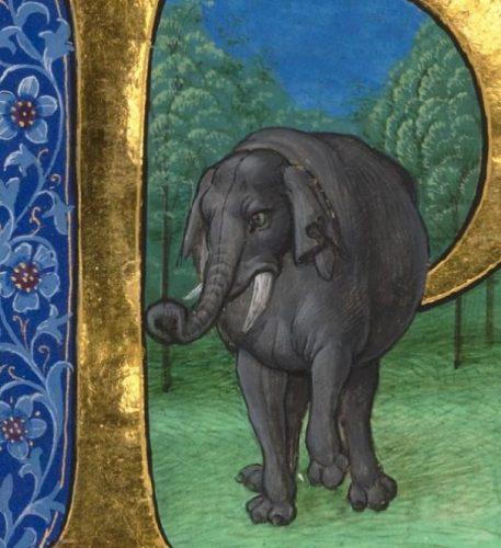 elefant_plinius
